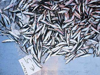 FischMires